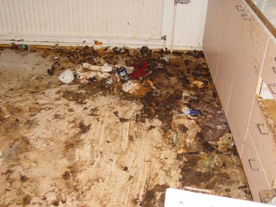 Vuokra-asunto sotkettu koiranulosteilla; Finnish Police discover dog shit covered apartment